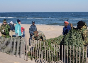 """Sailors assigned to Construction Battalion Maintenance Unit 202 and civilians with the Environmental Division at Joint Expeditionary Base Little Creek-Fort Story, place recycled Christmas trees at """"E"""" Beach at Joint Expeditionary Base Little Creek-Fort Story. The recycled trees are used to preserve sand dunes and prevent erosion. (Photo by: Seaman Tamekia Perdue) Photograph by Wikimedia, distributed under a CC-BY 2.0 license."""