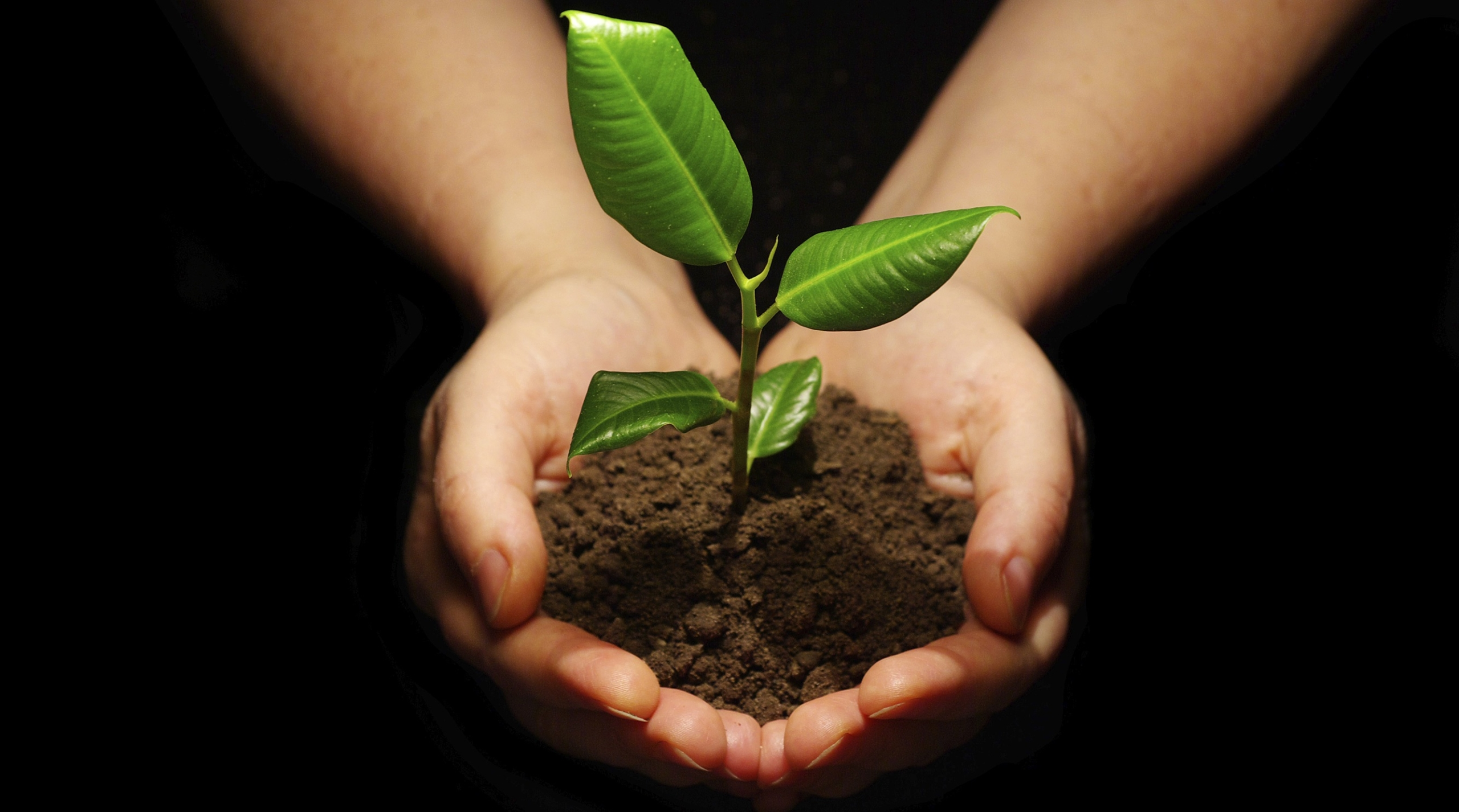 reforestation and replanting trees