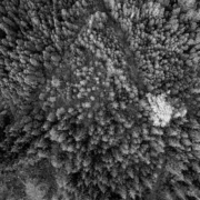 Forest-Overhead view